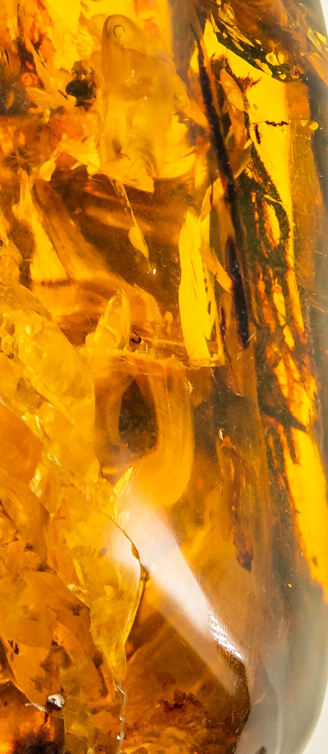 featherless flying animal in amber