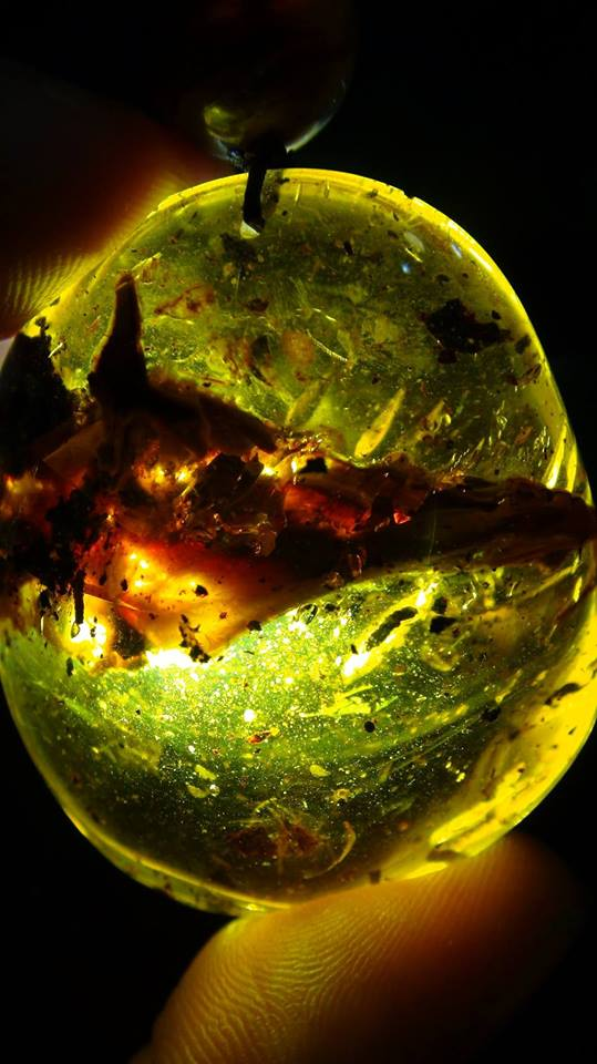 bird head in amber