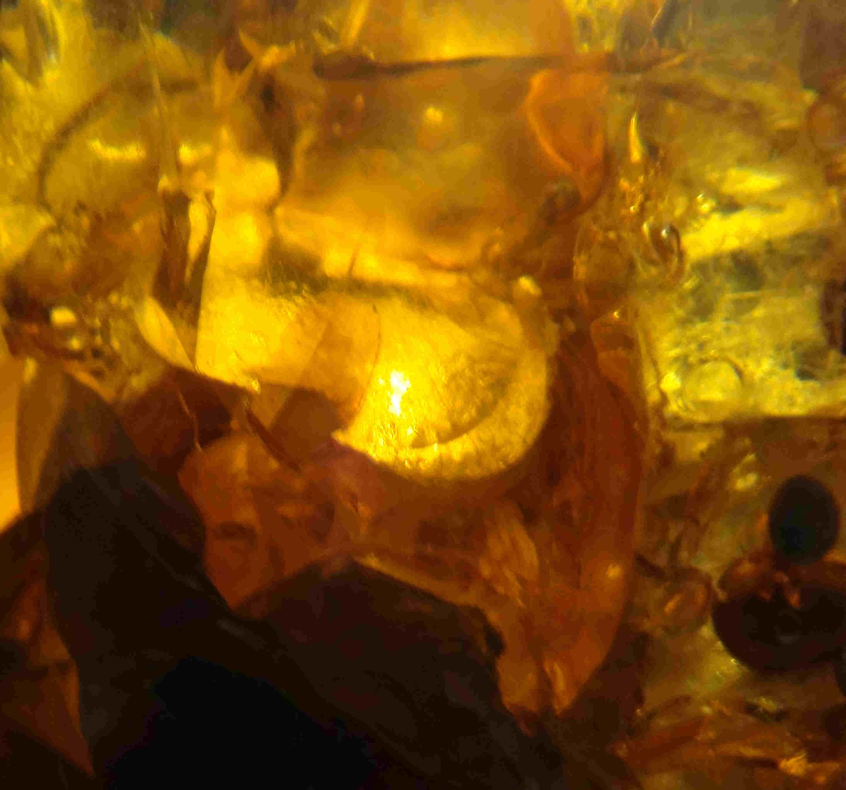 Potential 100 million year old Pterosaur in amber from Myanmar