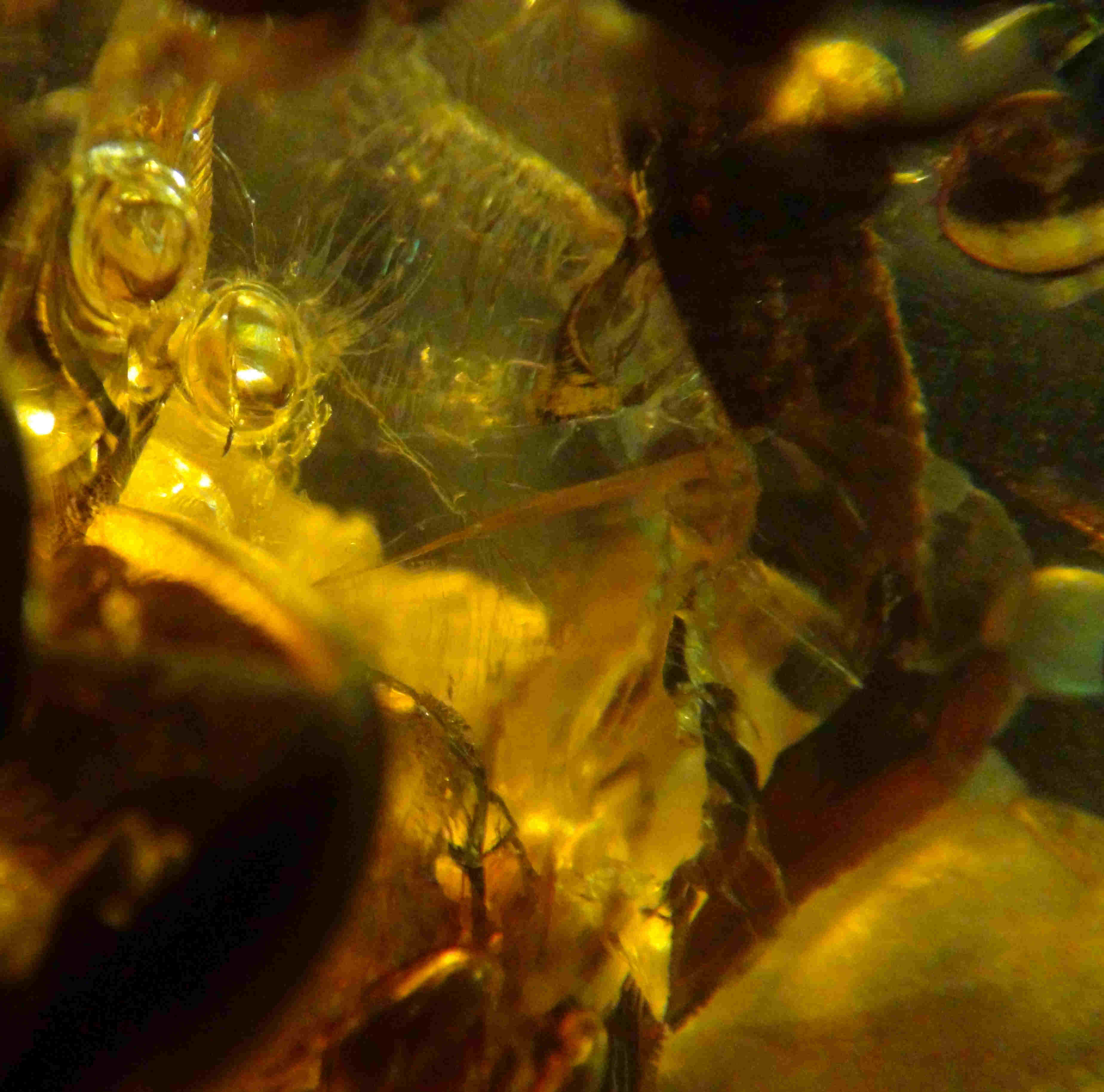 Worm in amber