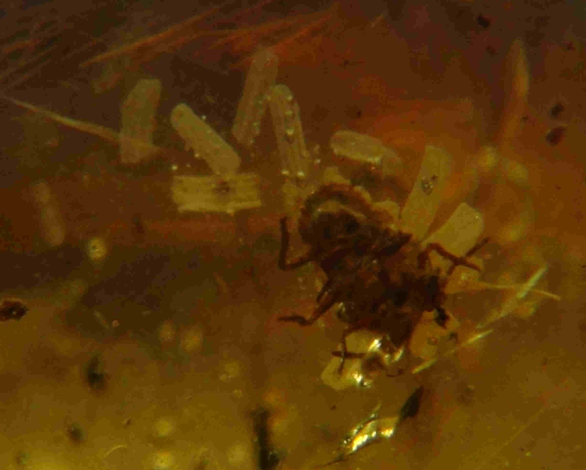 Spider with eggs in amber