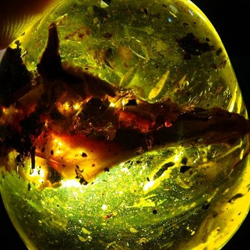 animal and bird head trapped in amber are very rare indeed